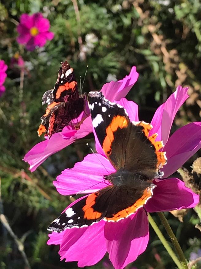 butterflyIMG_2085.jpg
